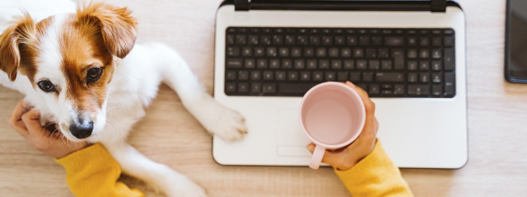 Widok od góry osoby pracującej przy laptopie, trzymającej w dłoni kubek i głaszczącej psa